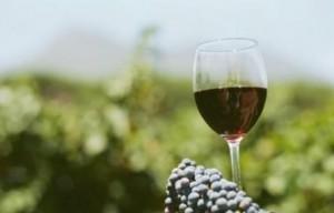 festa del vino monferrato